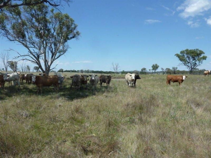 400 Dumaresq Road, Armidale, NSW 2350