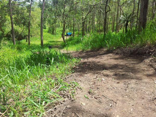 Lot 166 Woods Road, Dows Creek, Qld 4754