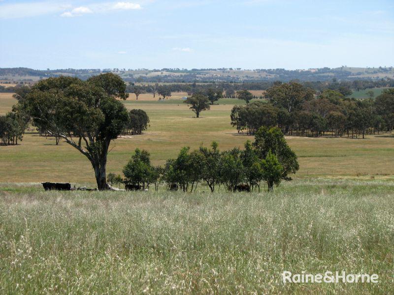 125 Grounds Road, Murringo, NSW 2586