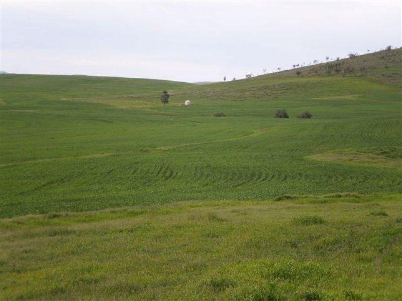 * Pine Valley, Orroroo, SA 5431