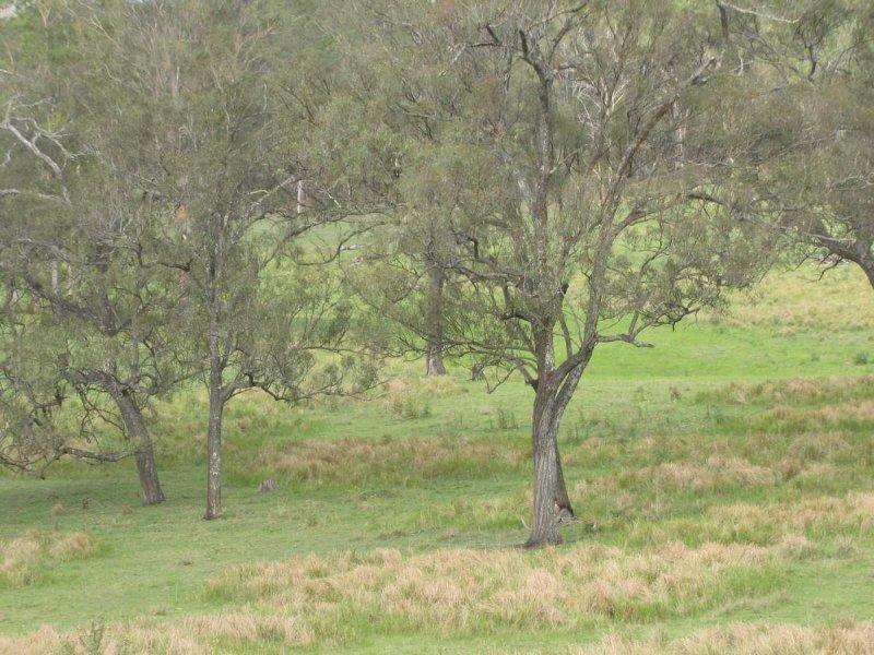 Dyraaba Rd, Dyraaba, NSW 2470