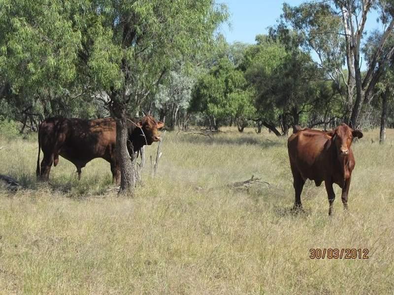 * Pendiana, Coolabah, NSW 2831