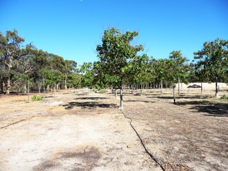 177 Plantation Drive, Westdale, WA 6304