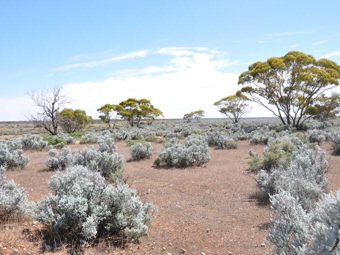 Lot 110 Stock Route Road, Morgan, SA 5320
