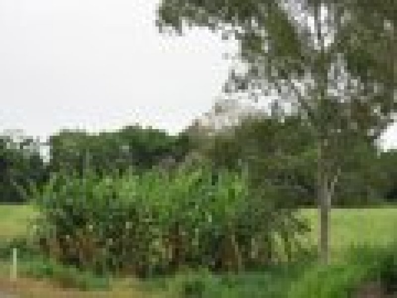 Lot 1 Dingo Beach Road, Gregory River, Qld 4800