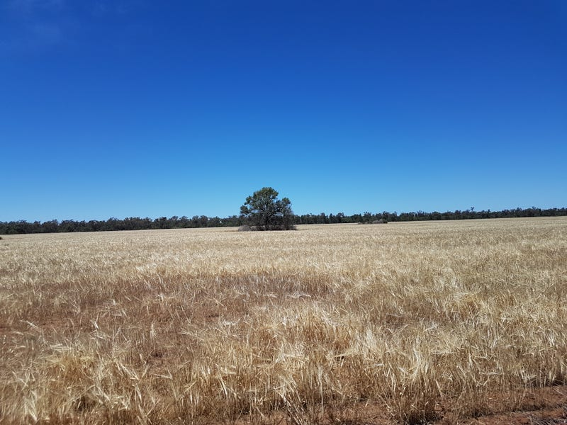 Address available on request, Gulargambone, NSW 2828