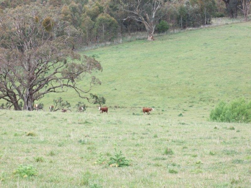 2937 Mid Western Highway, Blayney, NSW 2799