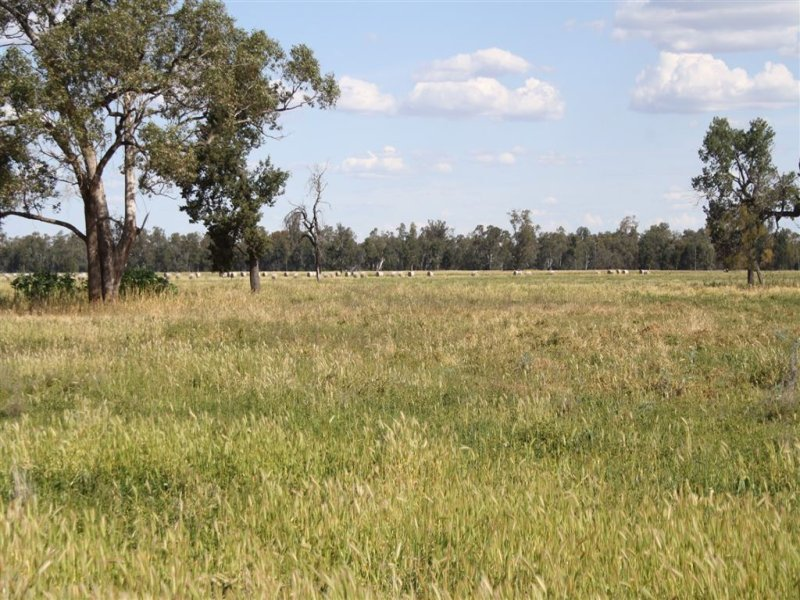 2554 East Coonamble Rd, Curban, NSW 2827