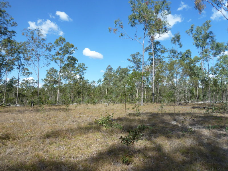 Lot 80 Glenbar Road, Glenbar, Qld 4620