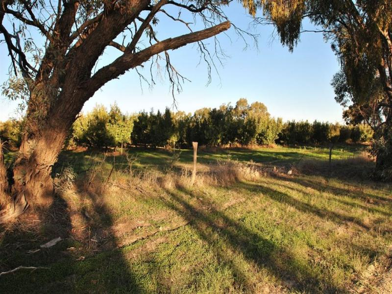 Lot 344 Research Road, Nuriootpa, SA 5355