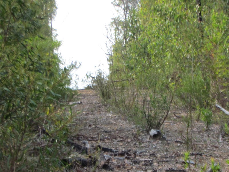 Lot 3573 Tamm Road, Quinninup, WA 6258