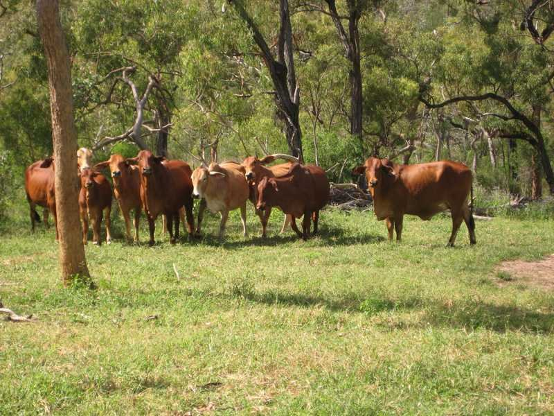 Lot 295 Campbell Road, Mutchilba, Qld 4872