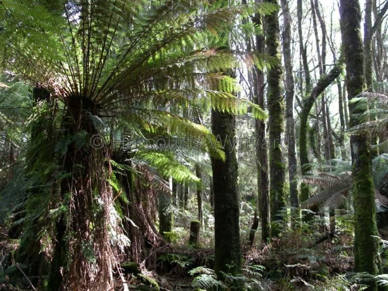 200 Hills Road, Meunna, Tas 7325