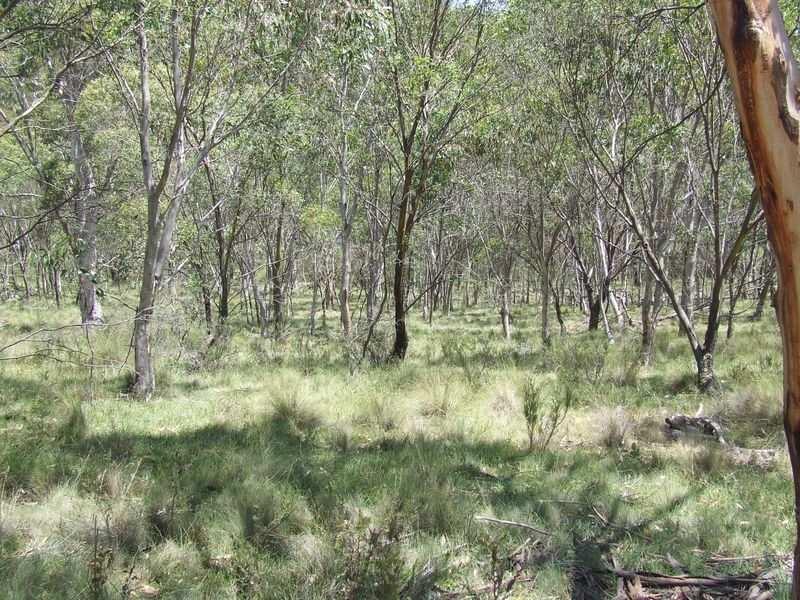 1382 Jerrong Road, Wiarborough, NSW 2580