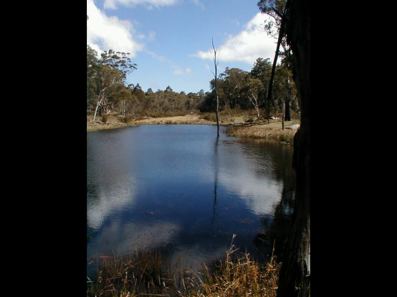 113 Greenlands Road, Nimmitabel, NSW 2631