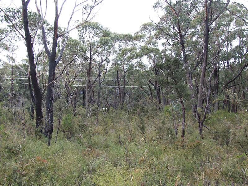 339 Chifley, Dargan, NSW 2786
