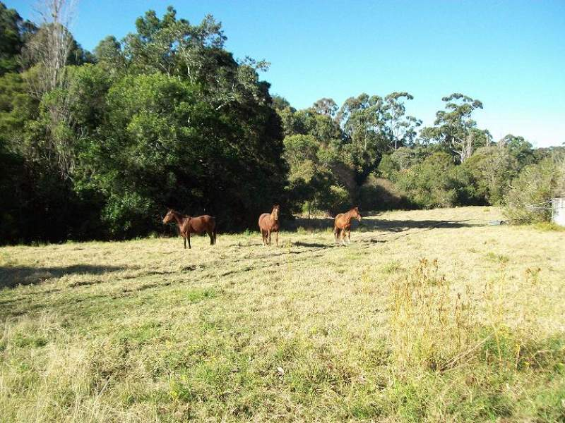 3097 Bucketts Way, Belbora, NSW 2422