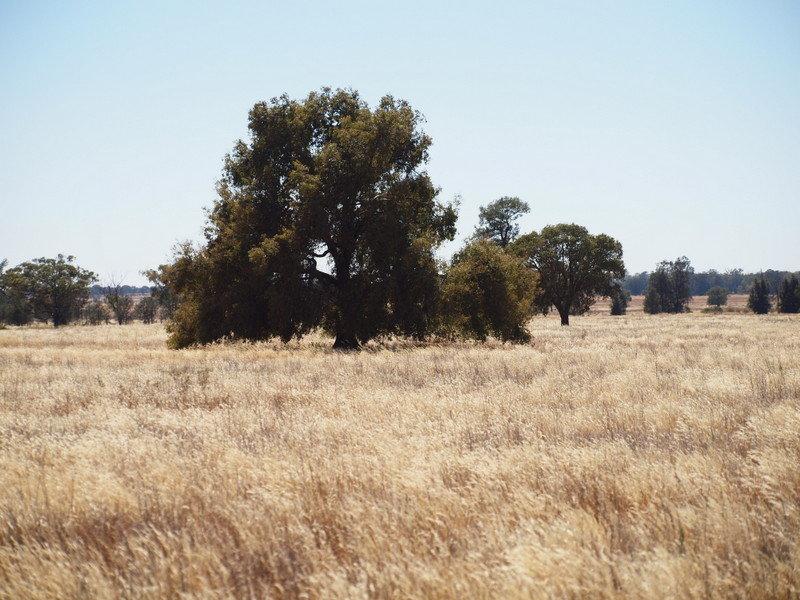 - 'Clear Ridge', West Wyalong, NSW 2671