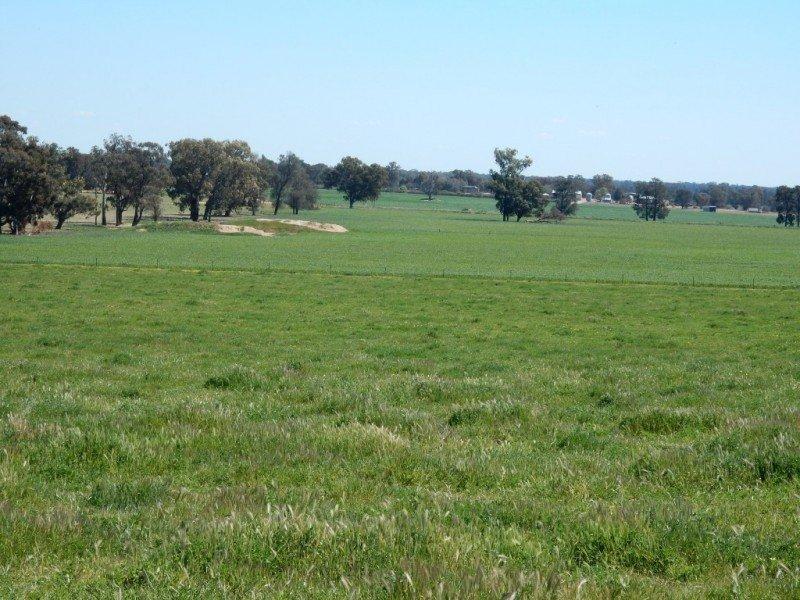 Kavason - 1258 Balldale Road, Balldale, NSW 2646