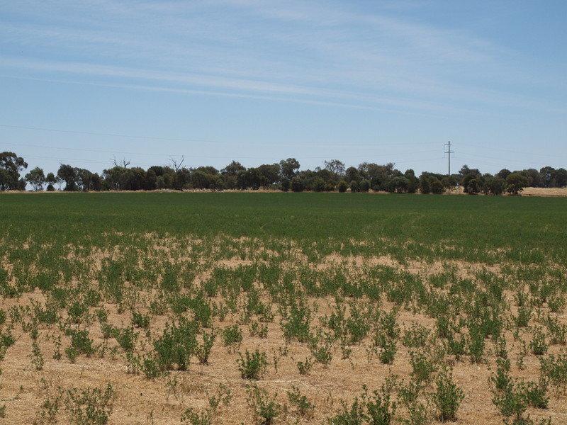 - 'Granvue', Cookardinia, NSW 2650