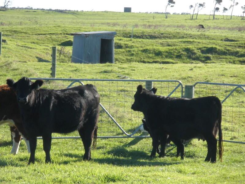 "1173 Fairhaven Road, Memana ""Apsley"", Memana, Tas 7255"