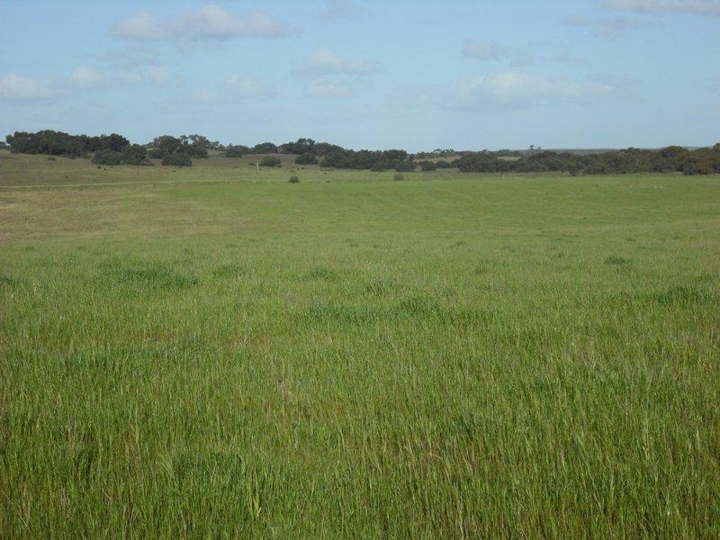 1564 Emu springs Road, Tintinara, SA 5266