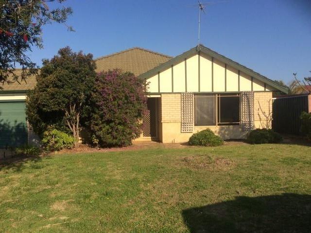 43 Celadon Loop, Banksia Grove, WA 6031