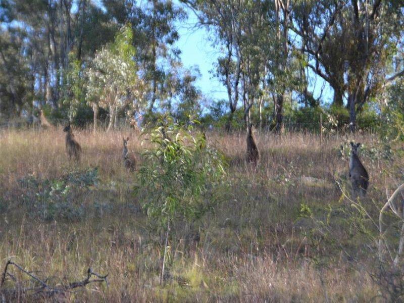 63 Anderson Road, Grattai, NSW 2850
