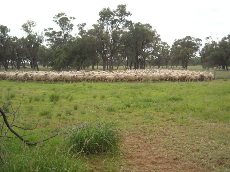 . BLUE RIBBON SHEEP COUNTRY -, Cunnamulla, Qld 4490