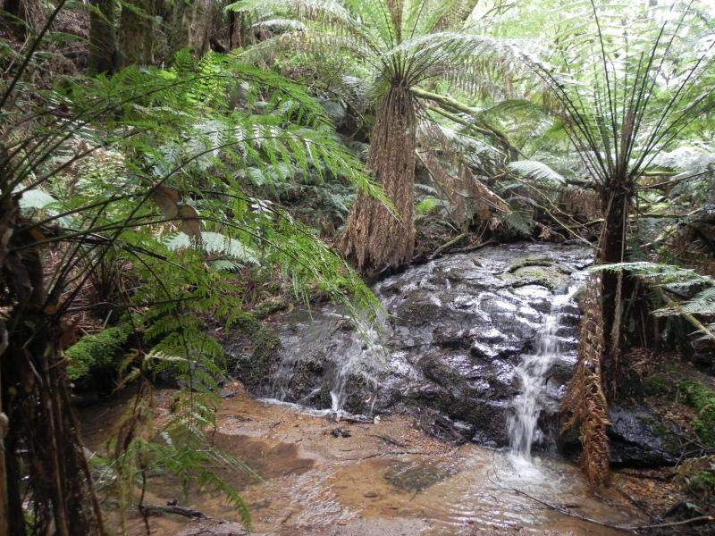 Lot 5, 145 Phillips Track, Beech Forest, Vic 3237