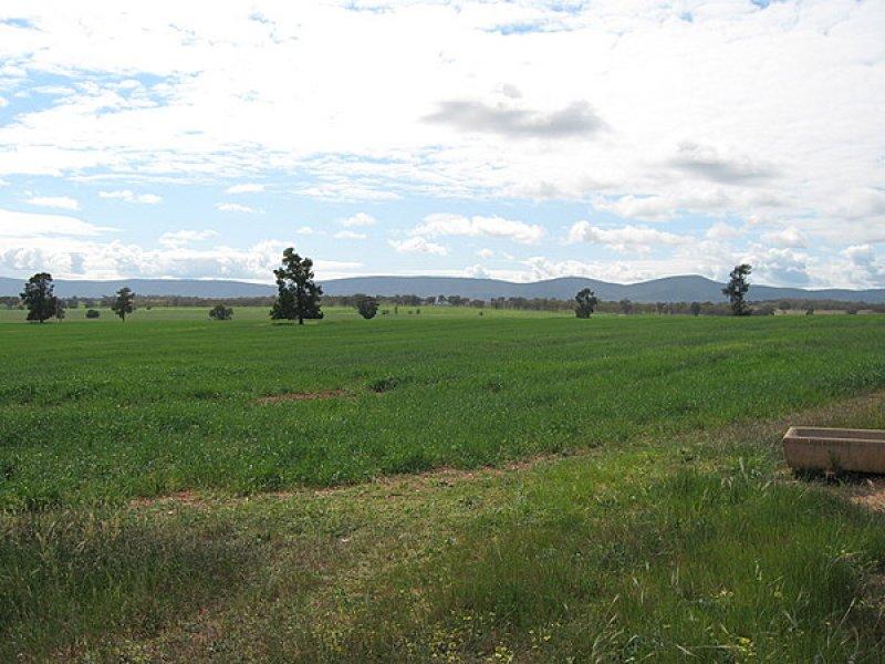 Lot 287 Newell Highway, Trewilga, NSW 2869