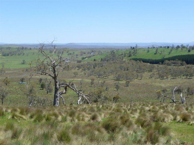 5416 Moanaro Highway, Nimmitabel, NSW 2631