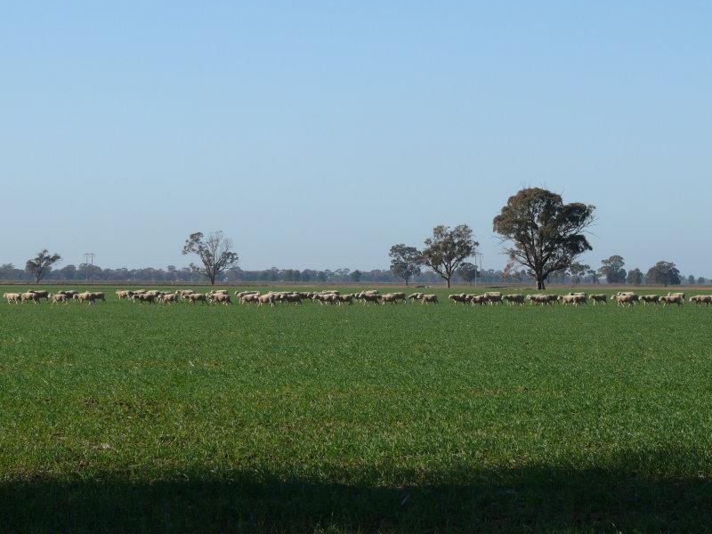 . Green Swamp Road, Berrigan, NSW 2712