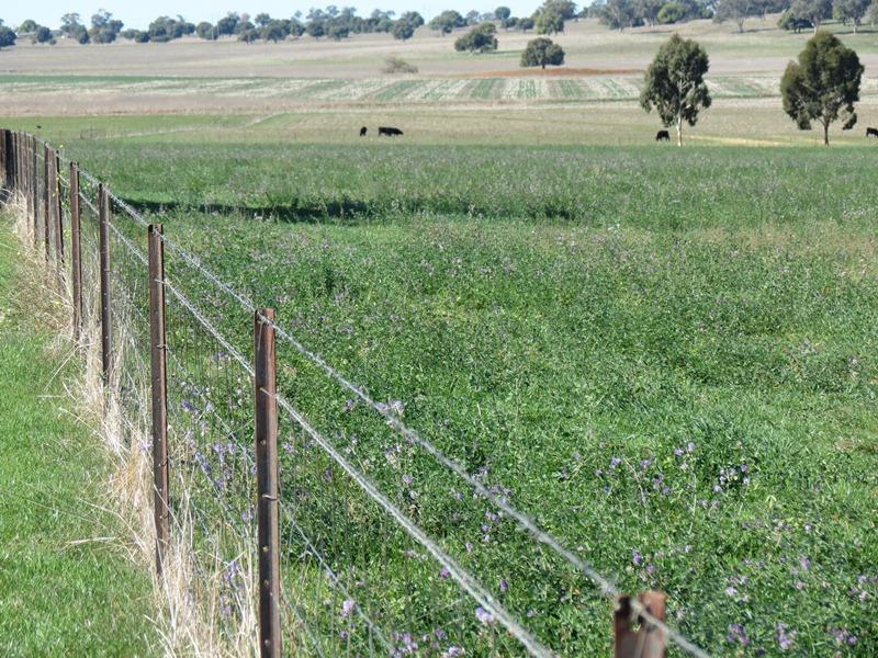 223 Highfield Lane, Geurie, NSW 2818