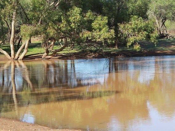 * Lily Park, Cobar, NSW 2835