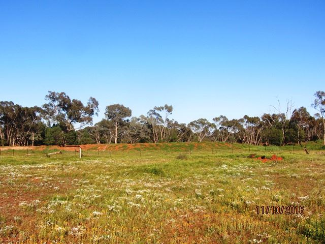 * Salt Bush Holdings, Cobar, NSW 2835