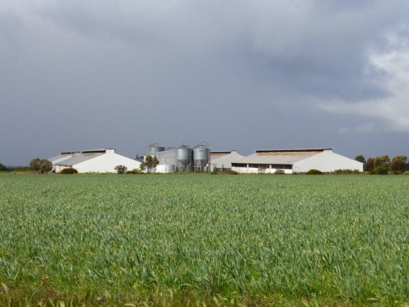 GROWventure Piggery, Section 91 and Lot 707  Angle Road, Eudunda, SA 5374