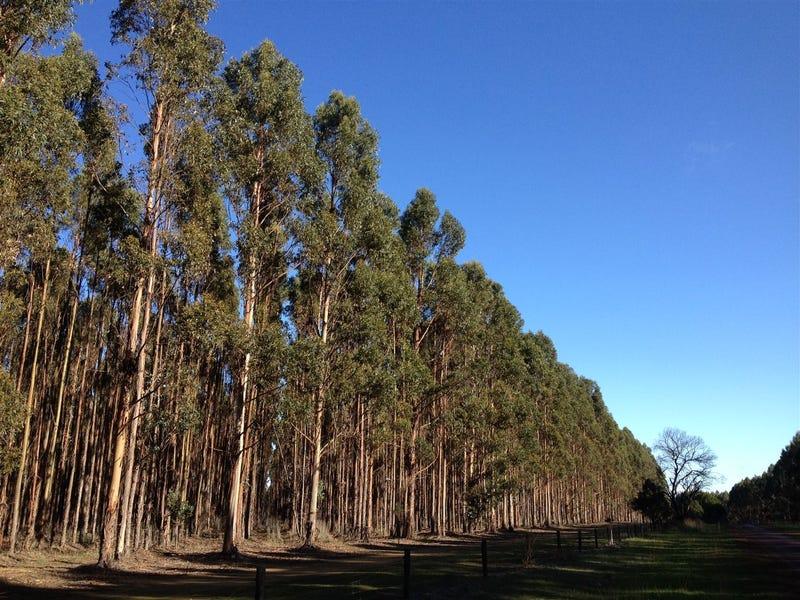 14 Forestry Properties, Ballarat Central, Vic 3350
