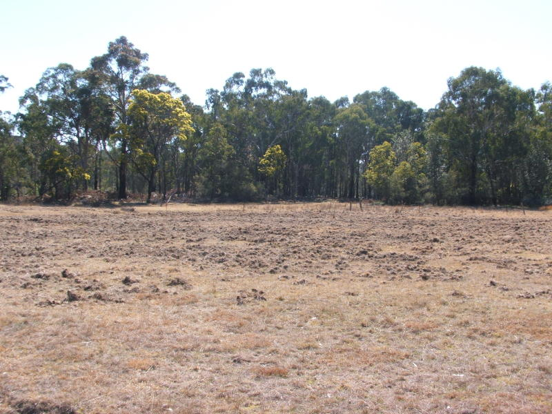 Cartarah Creek Road, Torrington, NSW 2371