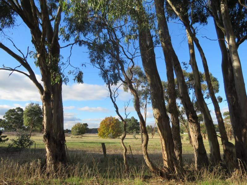 3660 Ballarat-maryborough  Road, Clunes, Vic 3370