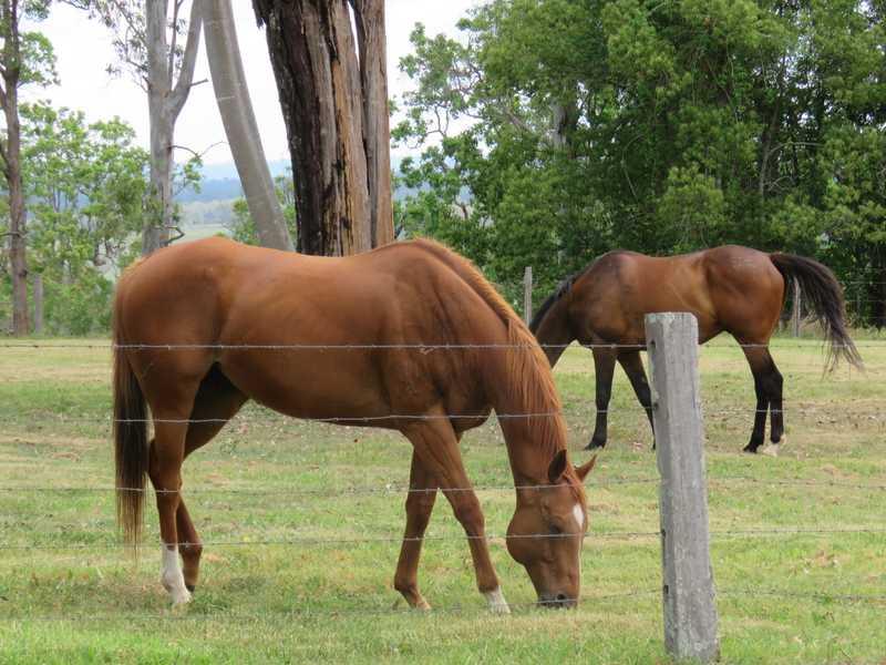 245 Upper Stratheden Road, Stratheden, NSW 2470