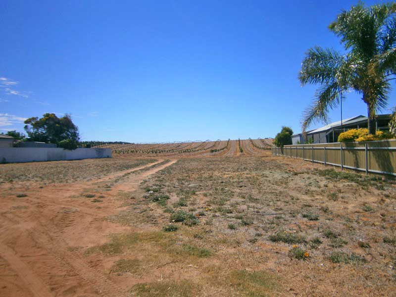 Lot 19 (60) Lewis Street, Ramco Heights, SA 5322