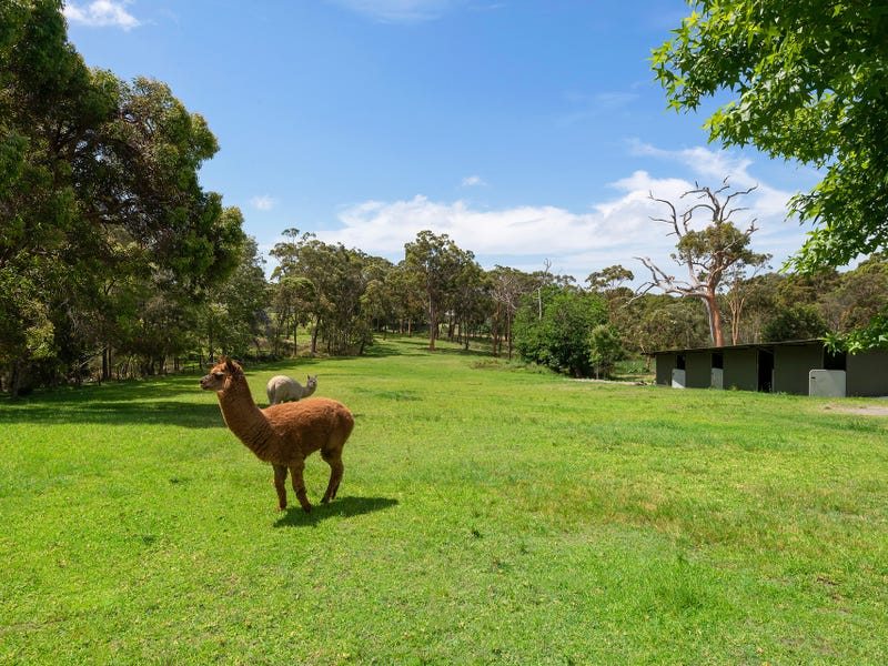 99 Violet Town Road, Floraville, NSW 2280