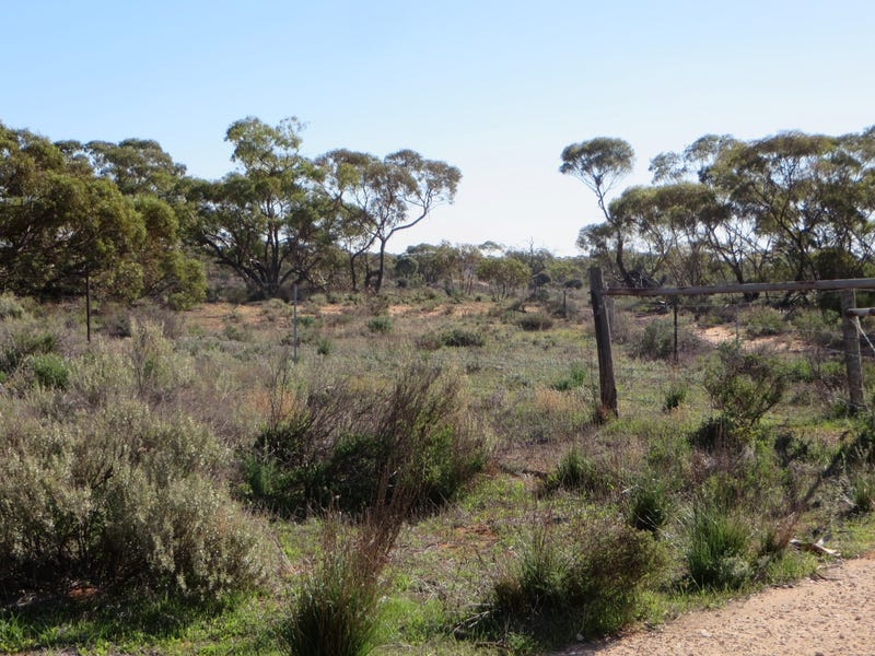 Goyder Highway, Westons Flat, SA 5320