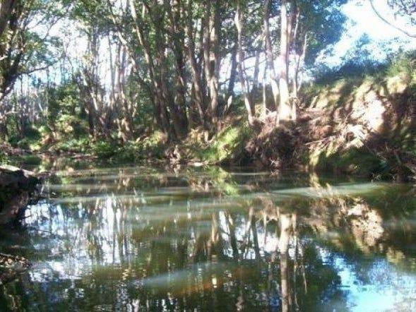29 Tallawudjah Creek Road, Glenreagh, NSW 2450