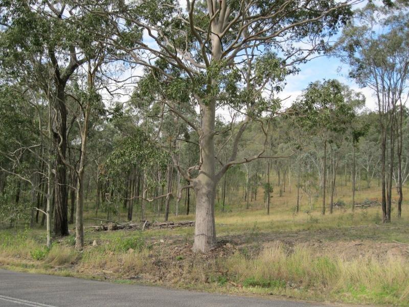 438 DUNGOG RD, Martins Creek, NSW 2420
