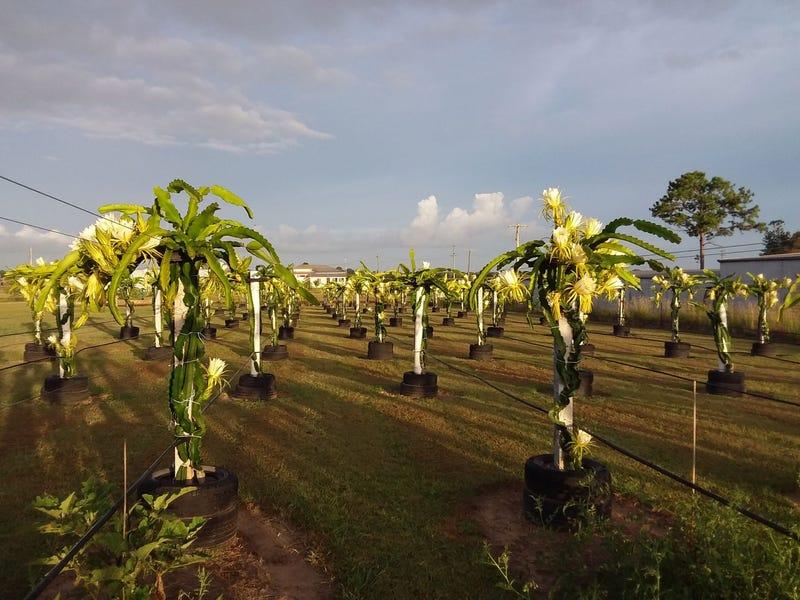 Lot 2/170 Island Plantation Rd, Island Plantation, Qld 4650