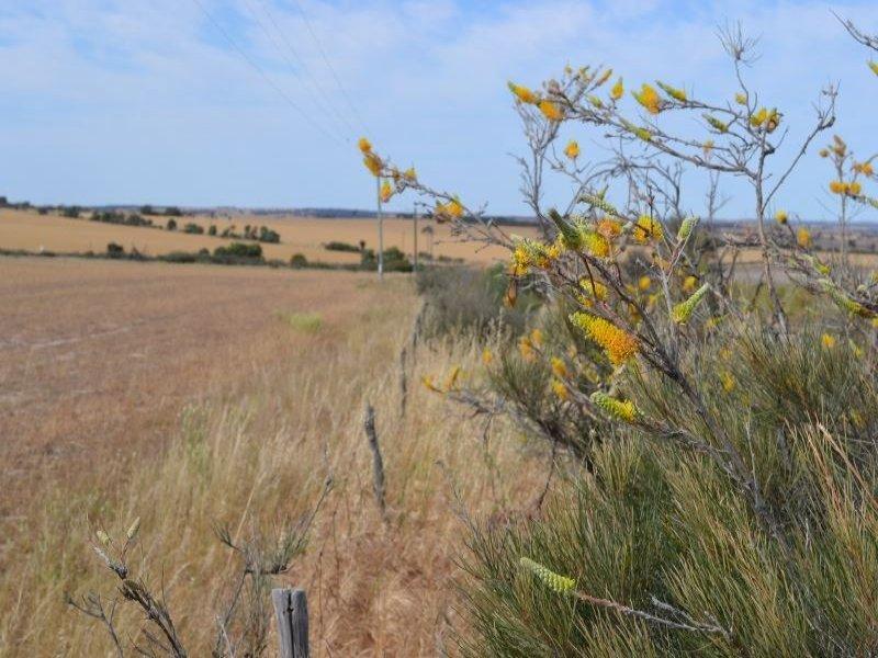 . The Ridge, Cunderdin, WA 6407