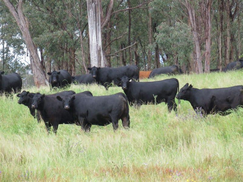 GLEN BARRA Glen Barra Road, Watsons Creek, NSW 2355