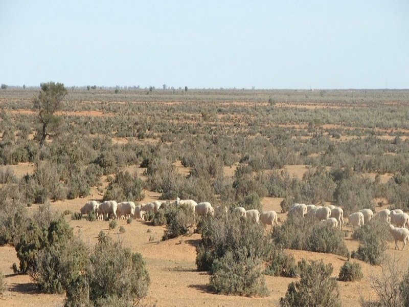 ". ""The Peppers"" Organic Grazing, Balranald, NSW 2715"